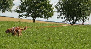 Biothane Ausbildungsleine 13 mm - 20 Meter